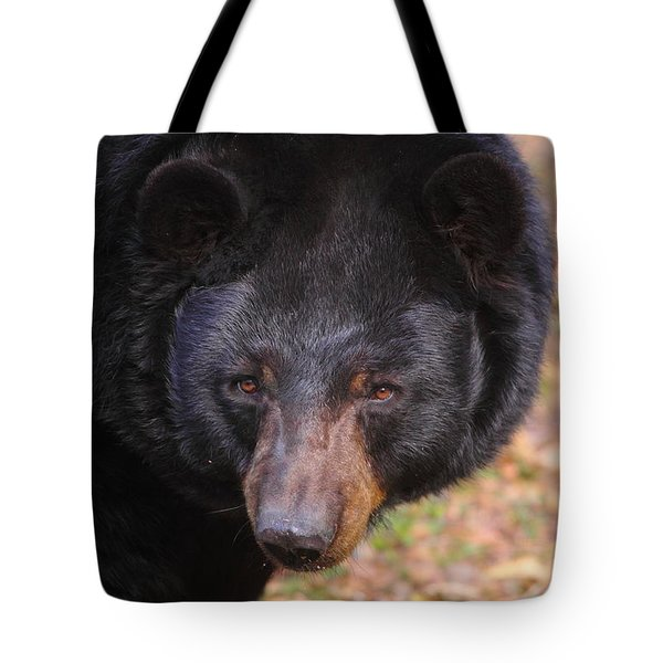 Florida Black Bear Tote Bag