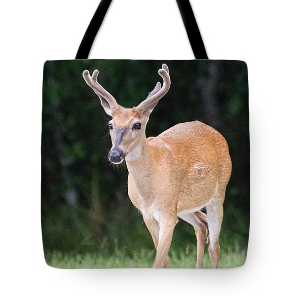 Tote Bag featuring the photograph Florida Whitetail Buck Deer With Velvet by John Black