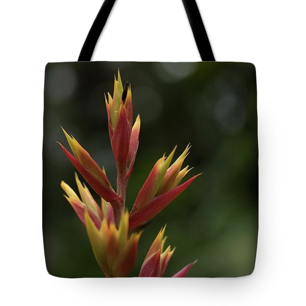 Tote Bag featuring the photograph Flower At Selby Gardens by Richard Goldman