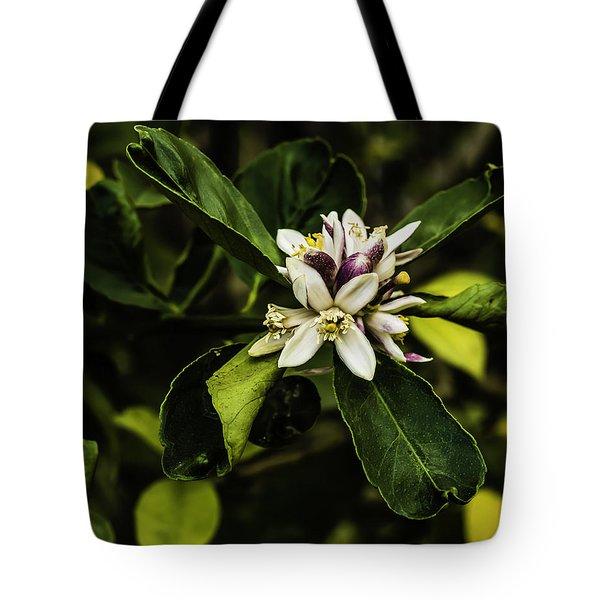 Flower Of The Lemon Tree Tote Bag