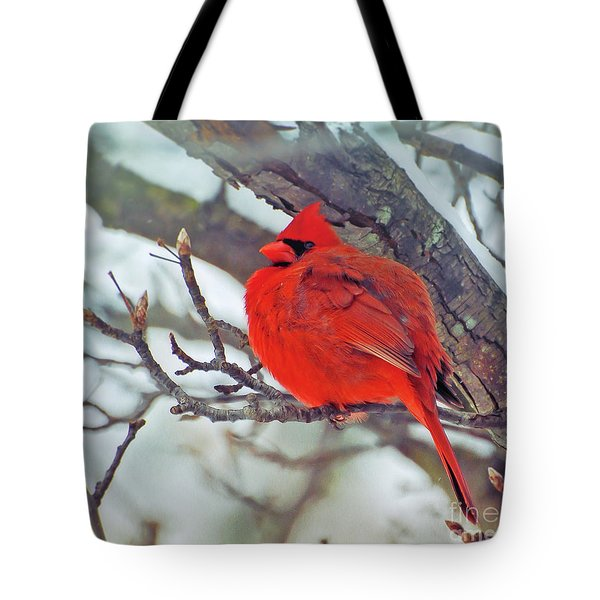 Fluffed Up Male Cardinal Tote Bag