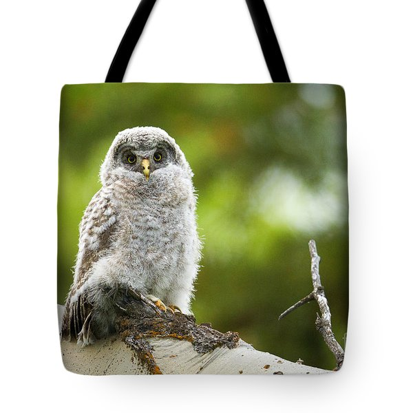 Tote Bag featuring the photograph Fluffy by Aaron Whittemore