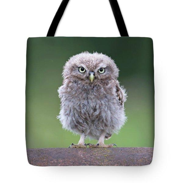 Fluffy Little Owl Owlet Tote Bag