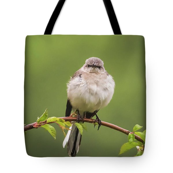 Fluffy Mockingbird Tote Bag by Terry DeLuco