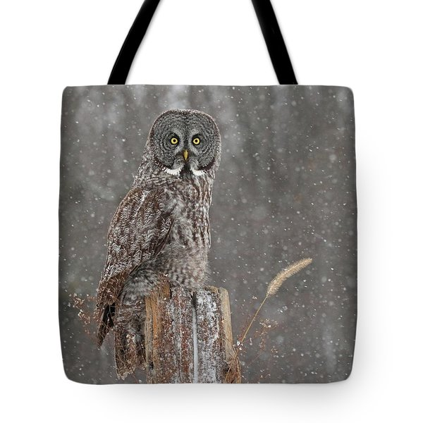 Flurries In The Forecast Tote Bag by Heather King