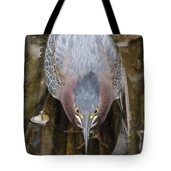 Focused Green Heron Tote Bag