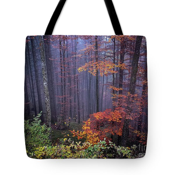 Tote Bag featuring the photograph Fog And Forest Colours by Elena Elisseeva