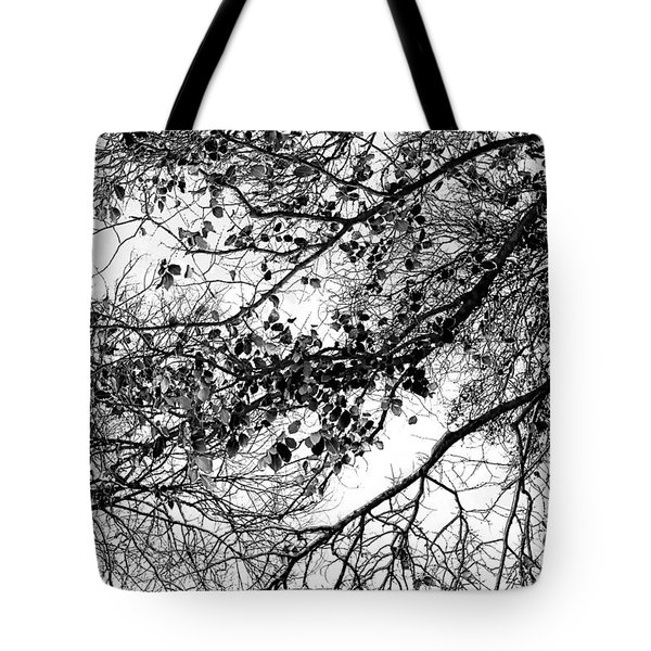 Forest Canopy Bw Tote Bag