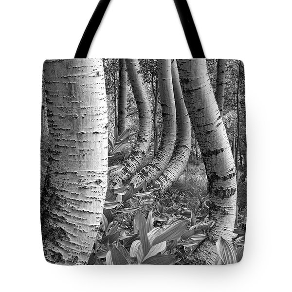 Forest Curves Tote Bag