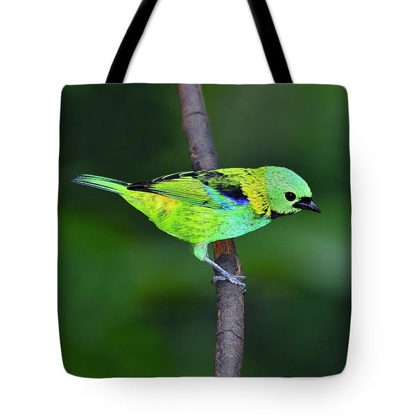 Forest Edge Tote Bag by Tony Beck