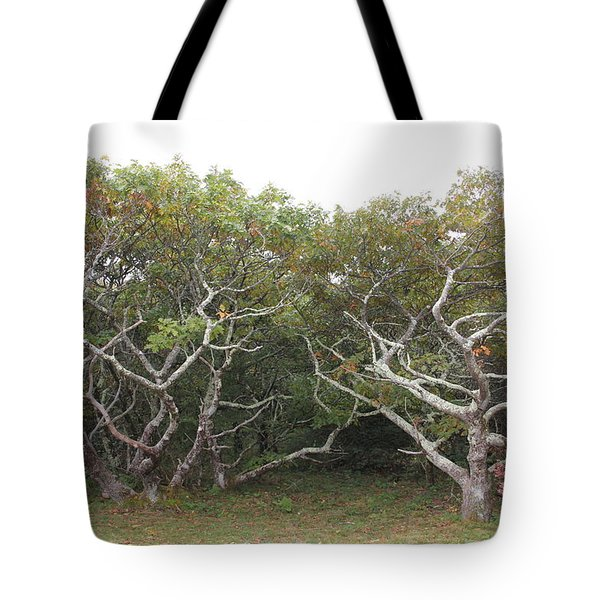 Forest Entry Tote Bag