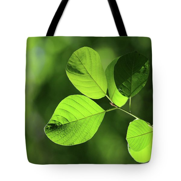 Forest Green 11 Tote Bag by Mary Bedy