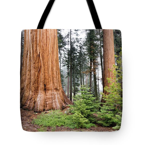Tote Bag featuring the photograph Forest Growth by Peggy Hughes
