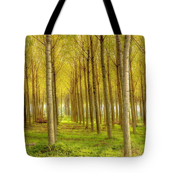 Forest In Autumn Tote Bag