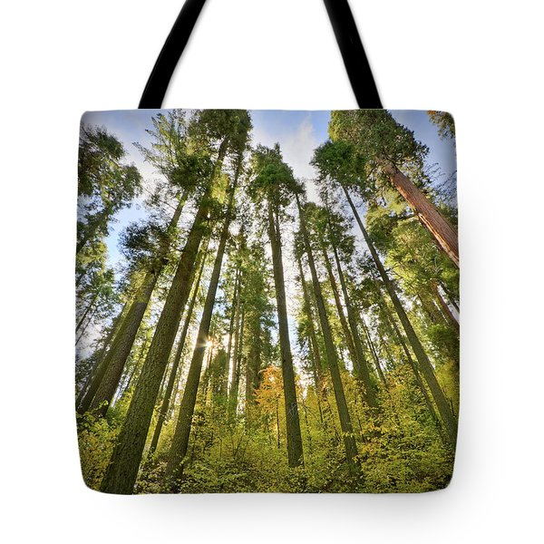 Forest Of Light Tote Bag