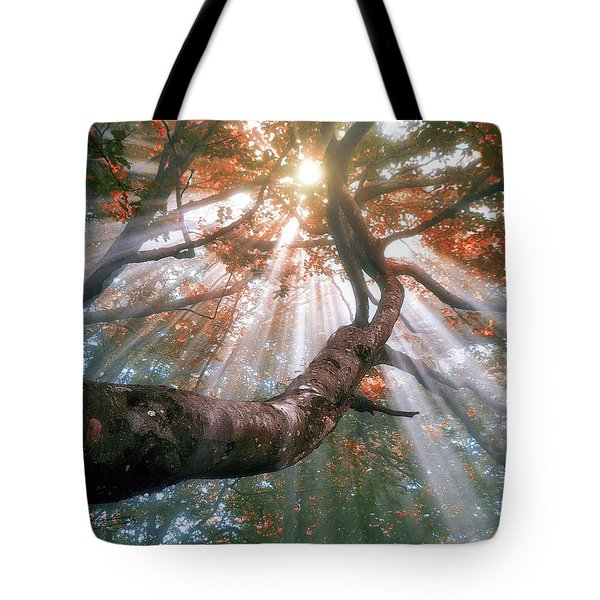 Forest With Fog And Sun Rays Tote Bag