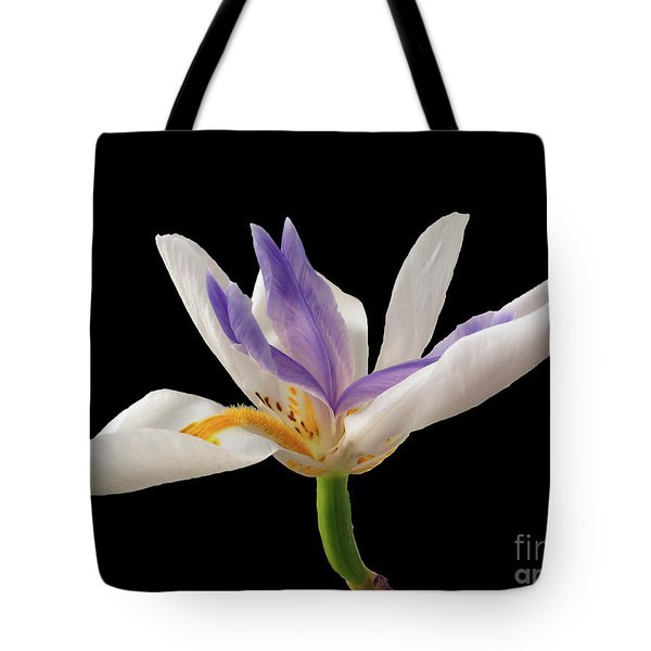 Fortnight Lily On Black Tote Bag