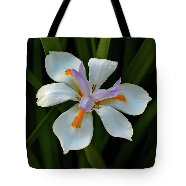 Tote Bag featuring the photograph Fortnight Lily by Richard Stephen