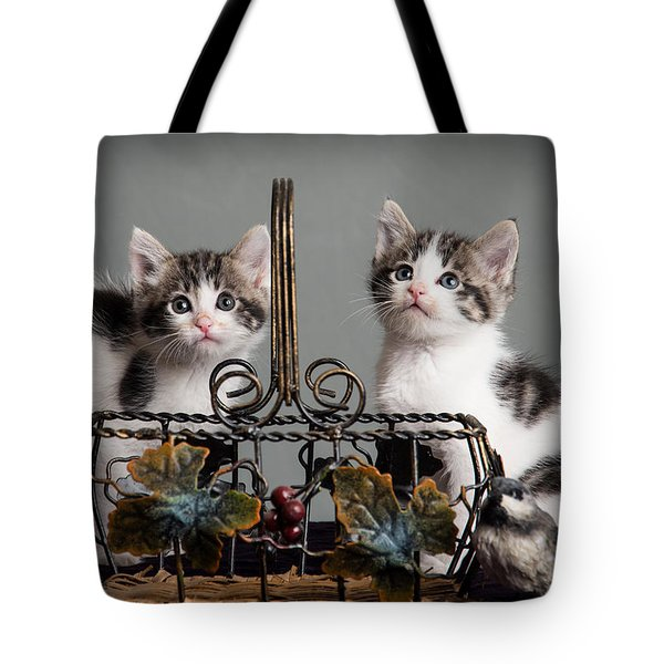 Foster Kittens Tote Bag by Janis Knight