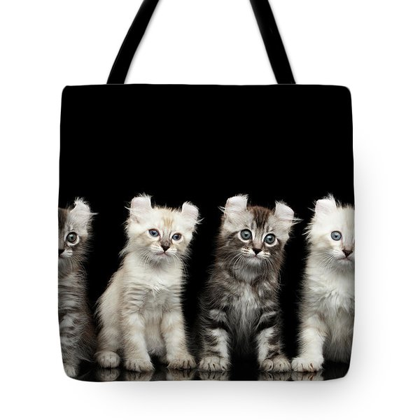 Four American Curl Kittens With Twisted Ears Isolated Black Background Tote Bag by Sergey Taran