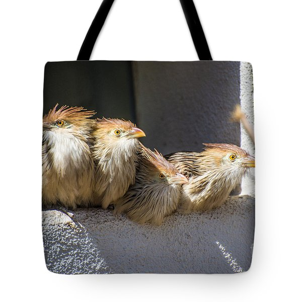Four Stooges - Guira Cuckoos Tote Bag by Gary Whitton