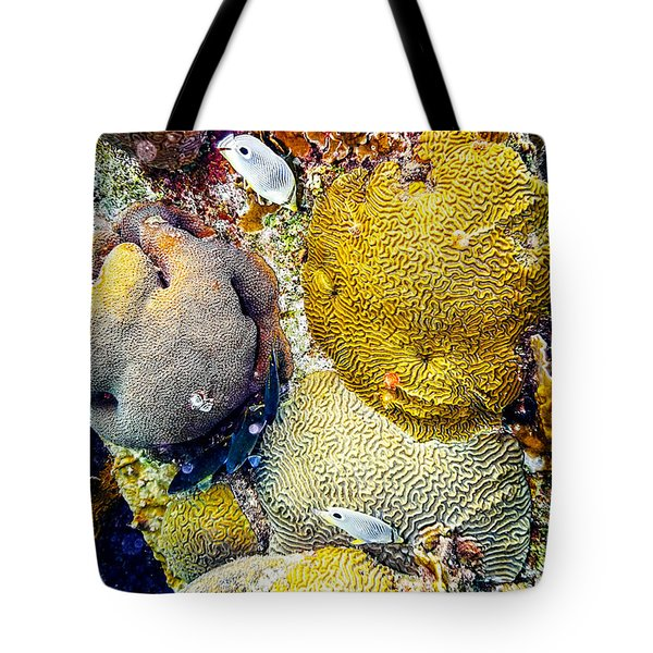 Tote Bag featuring the photograph Foureye Butterflyfish by Perla Copernik