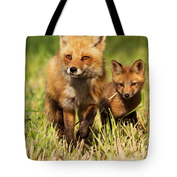 Fox Family Tote Bag by Mircea Costina Photography