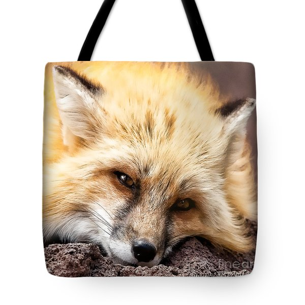 Fox Head Study In Square Format Tote Bag
