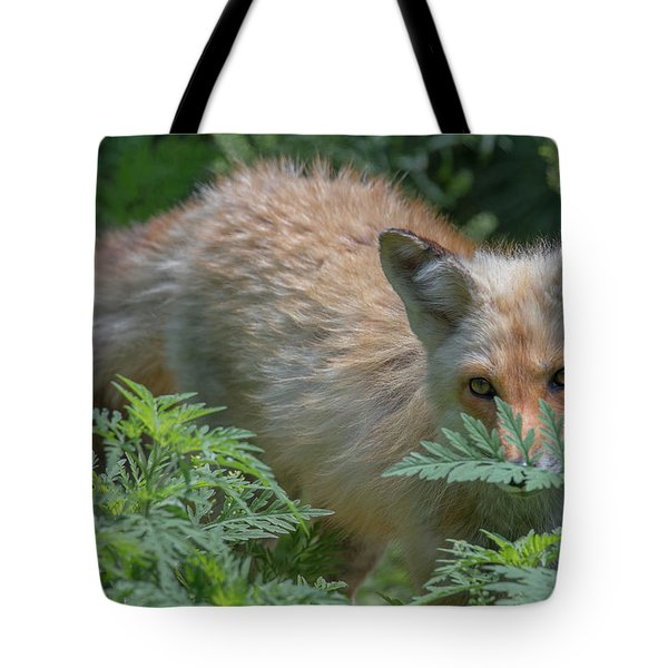 Fox In The Ferns Tote Bag
