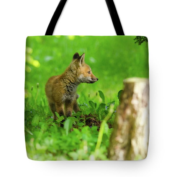 Fox Kit - 2 Tote Bag