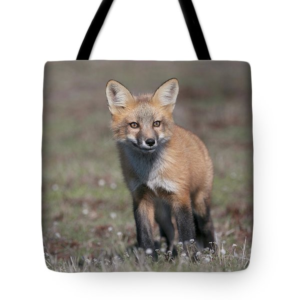 Fox Kit Tote Bag