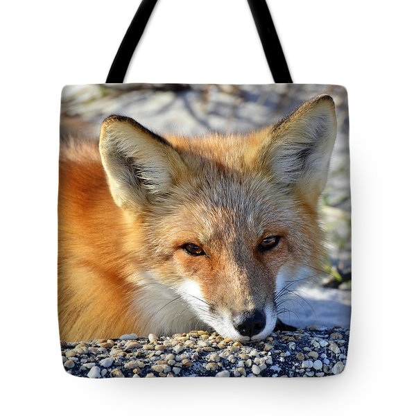 Fox Posing For Me Tote Bag by Sami Martin