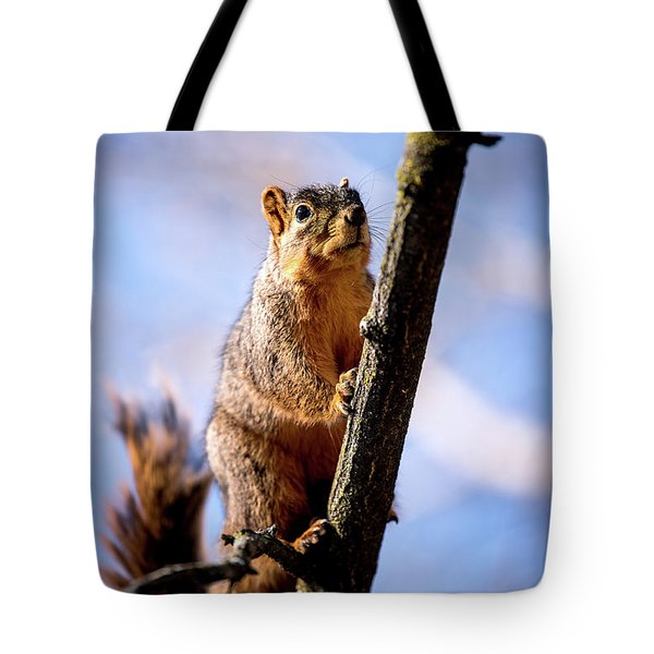 Tote Bag featuring the photograph Fox Squirrel's Last Look by Onyonet  Photo Studios
