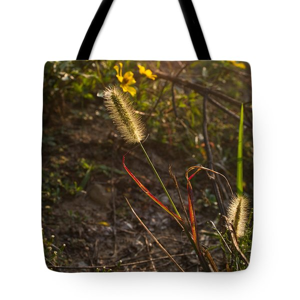Foxtail Glowing In Sun Tote Bag