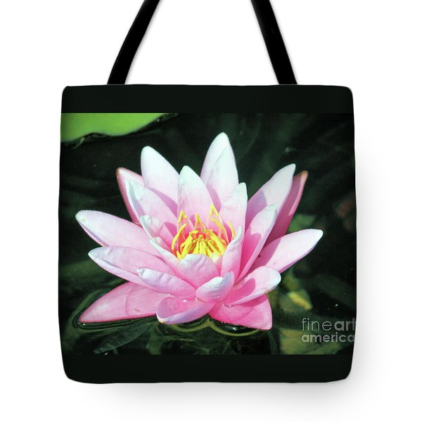 Frail Beauty - A Water Lily Tote Bag by J Jaiam