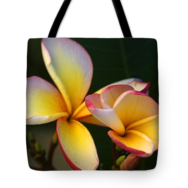 Frangipani Flowers Tote Bag by Ralph A  Ledergerber-Photography