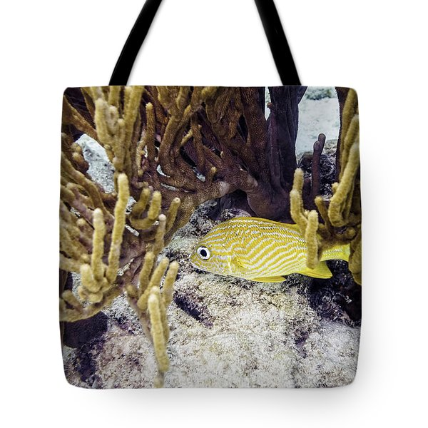 Tote Bag featuring the photograph French Grunt Swimming by Perla Copernik