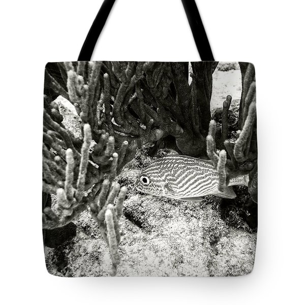 French Grunt Under Corals Tote Bag