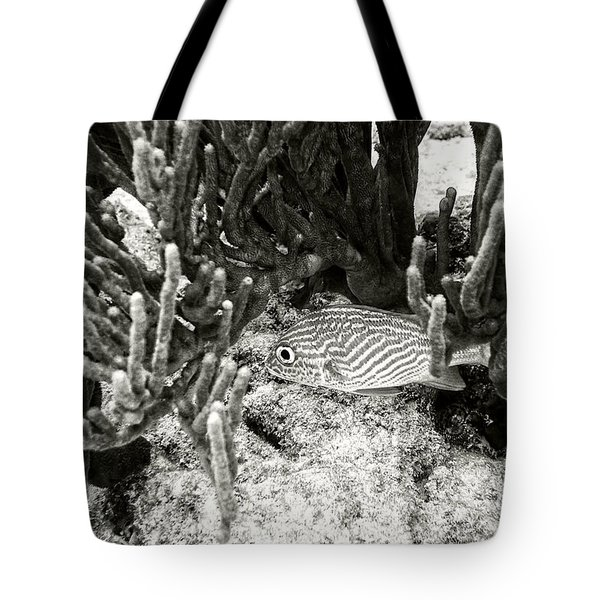 French Grunt Under Corals Tote Bag by Perla Copernik