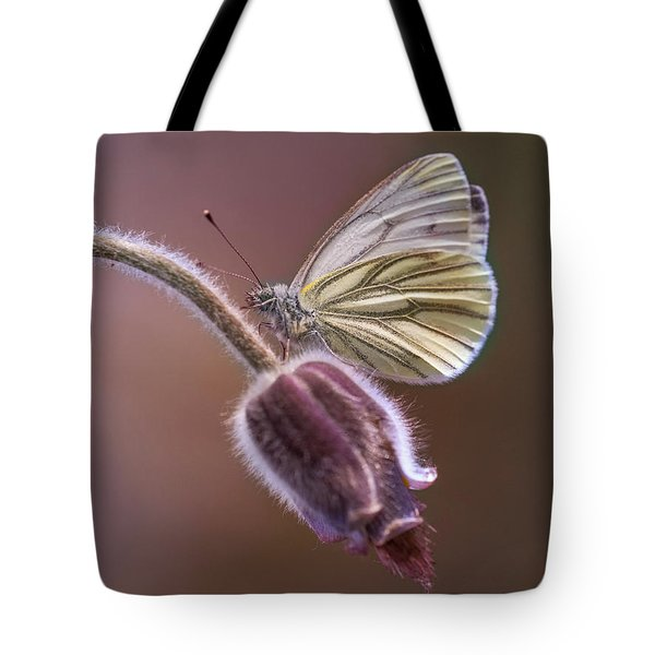 Fresh Pasque Flower And White Butterfly Tote Bag by Jaroslaw Blaminsky