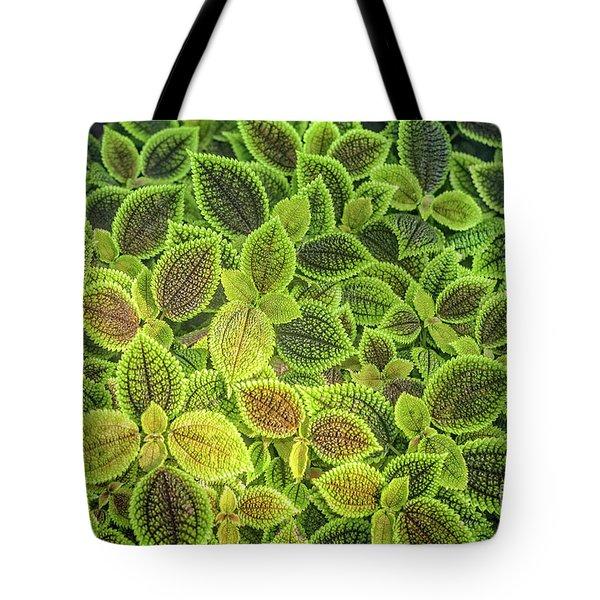 Friendship Plant Tote Bag