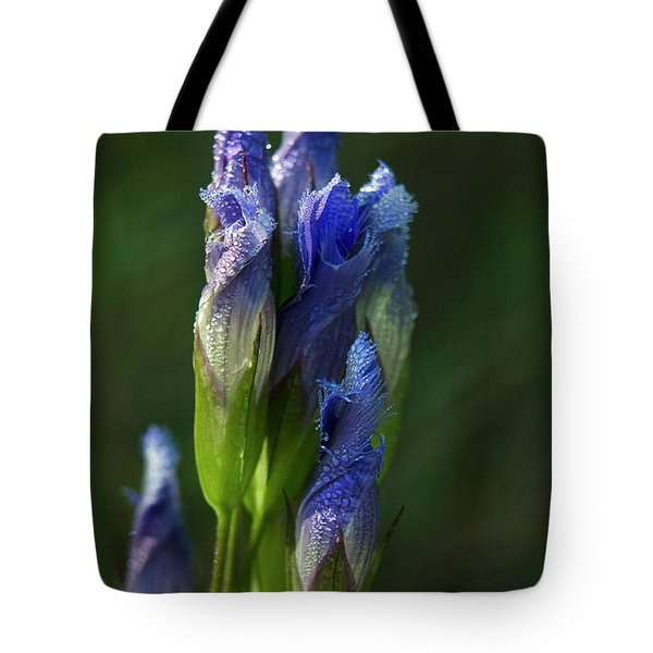 Fringed Getian With Dew Tote Bag by Ann Bridges