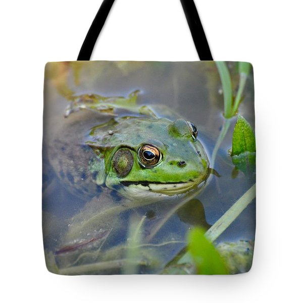 Frog Hiding In The Pond Tote Bag