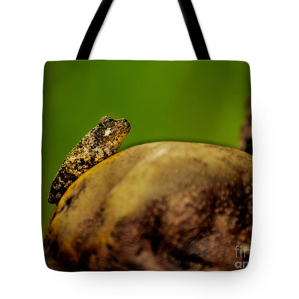 Frog Waits Tote Bag