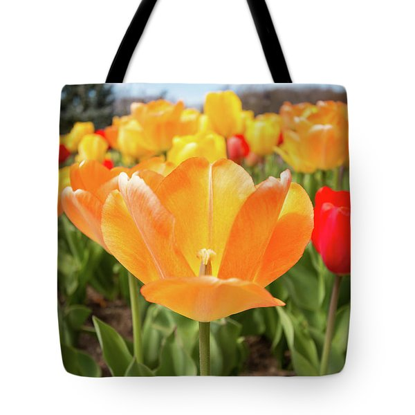 Tote Bag featuring the photograph Front Of The Tulips by Brian Hale