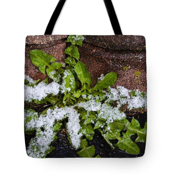 Frosted Dandelion Leaves Tote Bag