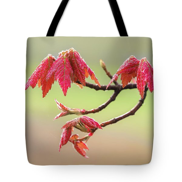 Frosty Maple Leaves Tote Bag