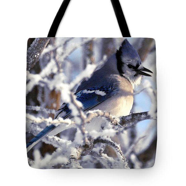 Frosty Morning Blue Jay Tote Bag