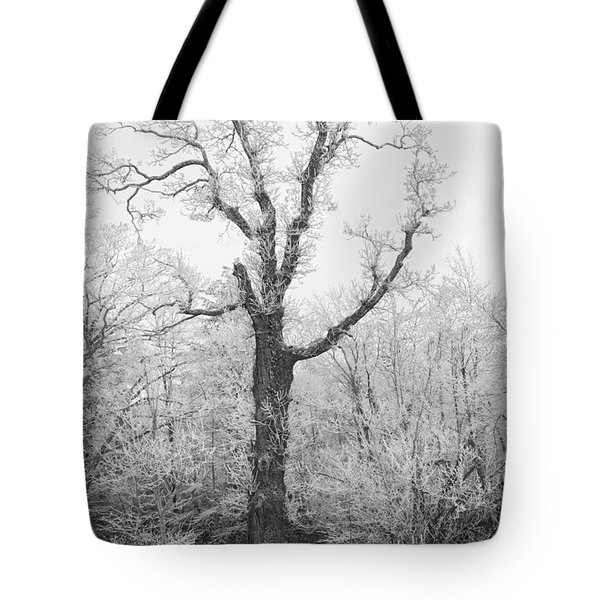Tote Bag featuring the photograph Frosty Old Tree by Ken Barrett