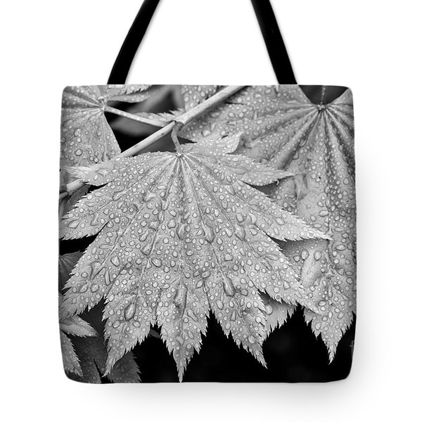 Full Moon Maple Leaf After A Spring Rain Tote Bag
